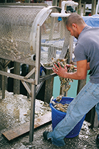 washing_oysters_at_crab_catchers_little_river_restaurant